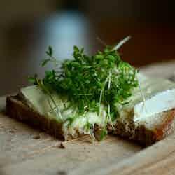 Brieost på rågbröd med en grön bris